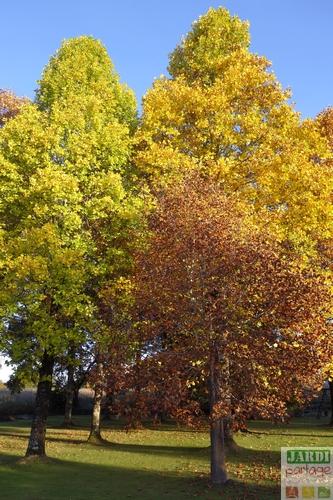 arbre feuille jaune automne