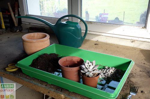 comment rempoter une plante grasse