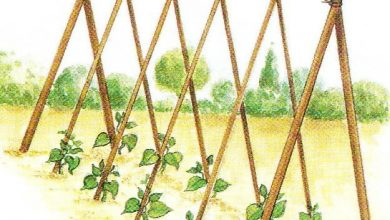 Photo of Quelques idées de tuteurs pour vos haricots à rames