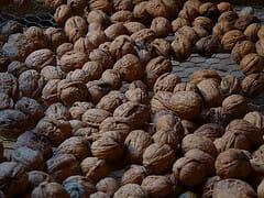 sechage des noix