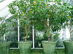 Comment hiverner plantes en pot