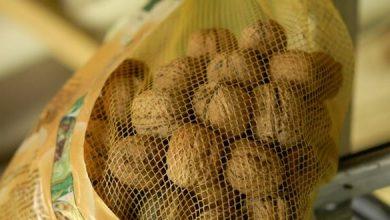 Photo de Le séchage des noix fraîchement récoltées