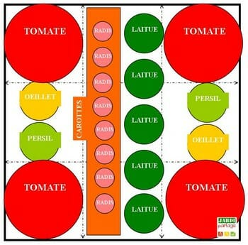 plan de carré potager