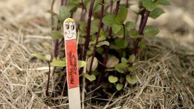 fabriquer des étiquettes de jardin