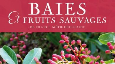 Photo of Guide des baies et fruits sauvages