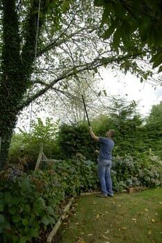 comment élaguer un arbre depuis le sol