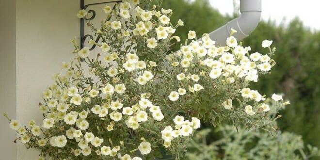 potée de fleurs d'automne