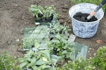 plantation de prestimottes jardin express