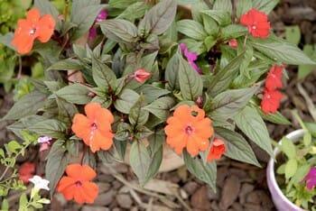 plantes en pots extérieur entretien