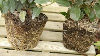 Photo de Achat plante en conteneur