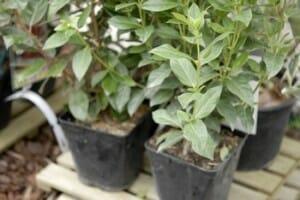 conseils achat plantes