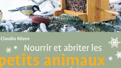 Photo of Nourrir les oiseaux du jardin