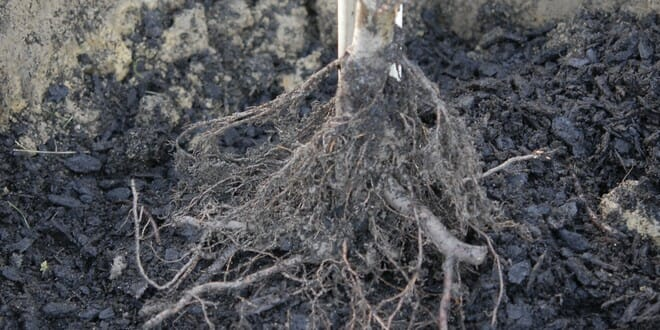 Que planter en hiver