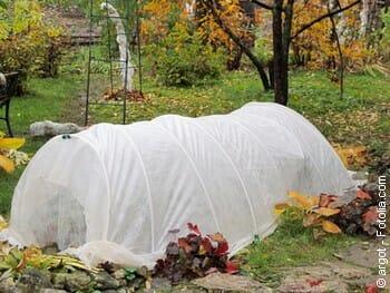 Comment protéger ses plantes du gel
