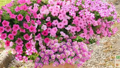 jardinieres fleuries modeles