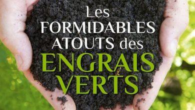 Photo of Les formidables atouts des engrais verts