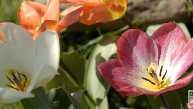 Photo of Un début de printemps haut en couleurs !