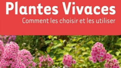 Photo de Plantes vivaces: comment les choisir et les utiliser ?