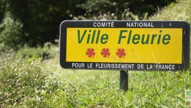 Photo of Echange jardinière fleurie contre bons soins
