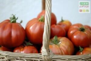 récolter les tomates