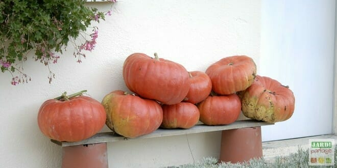 Photo of Cueillir et conserver les courges