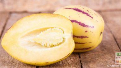Photo de Poire melon, une solanacée méconnue
