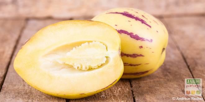 pepino melon poire