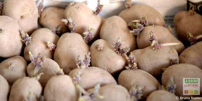 quand planter pommes terre