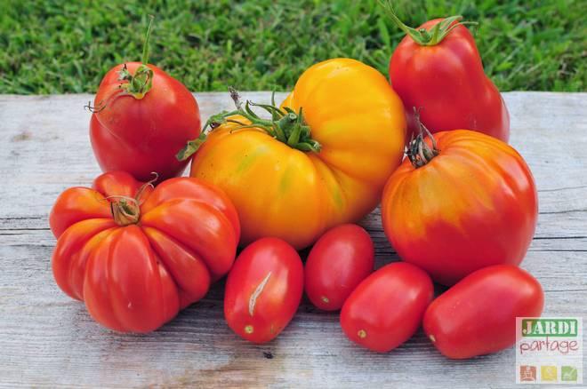 astuce culture tomate