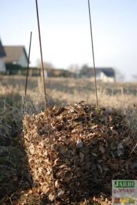 Terreau de feuilles mortes