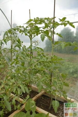abri pour tomates