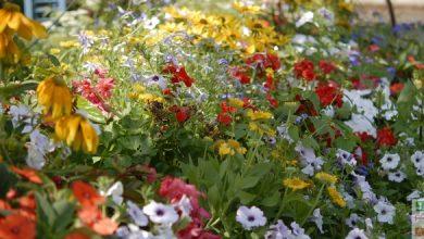 definition jardin durable