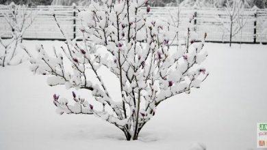 Photo de Faut-il craindre la neige au jardin ?