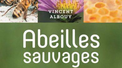Photo de Abeilles sauvages de V.Albouy