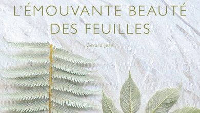 Photo de L'émouvante beauté des feuilles de G.Jean