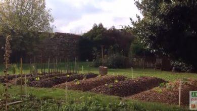 cultiver sur une butte permaculture