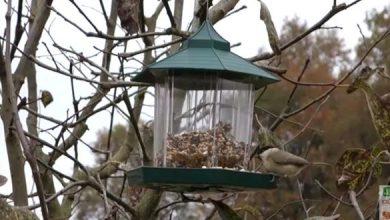 Photo de Comment aider les oiseaux du jardin ?