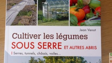 Photo of Cultiver les légumes sous serre