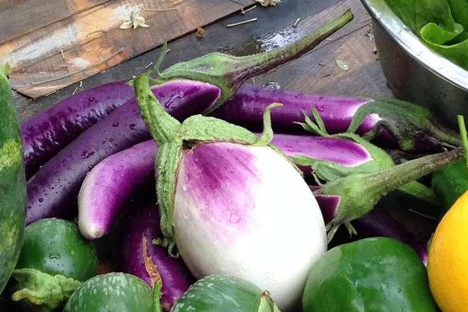 variete aubergine sfumata di rosa