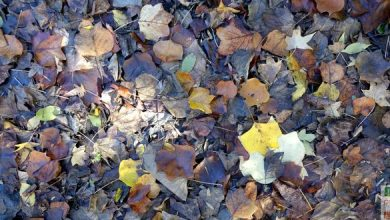 Photo of Fabriquez votre terreau de feuilles mortes