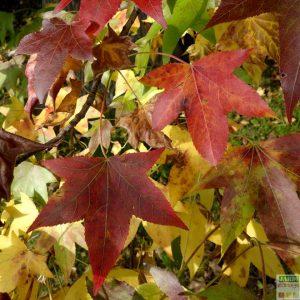 faire terreau de feuilles