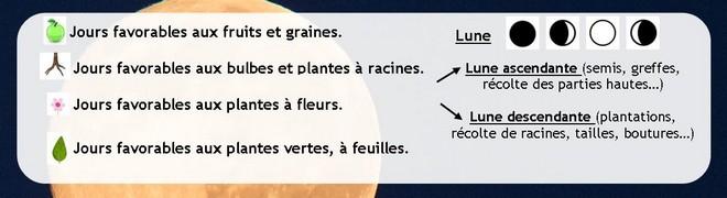 Calendrier Lunaire Graines Et Plantes Mai 2019.Calendrier Lunaire Du Jardinage Jardipartage