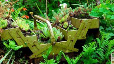 Photo of Une potée originale de plantes grasses