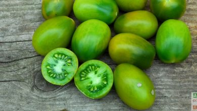 Photo of Tomate green Sausage: la Reine des salades