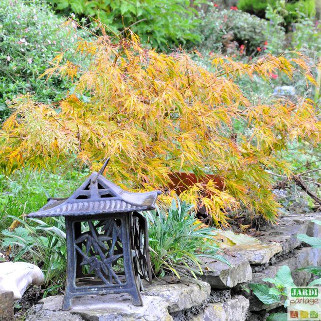 plantes pour un jardin japonais