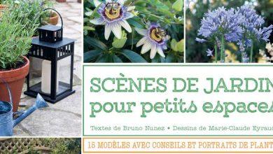 Photo de Scènes de jardin pour petits espaces
