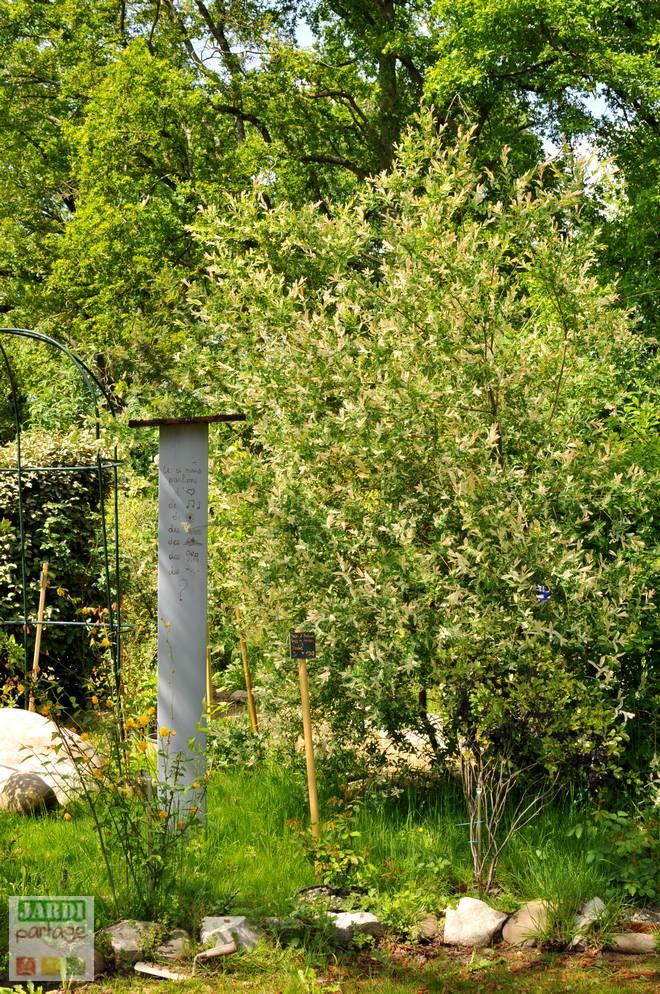 arbre crevette entretien