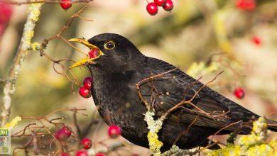arbuste pour oiseaux