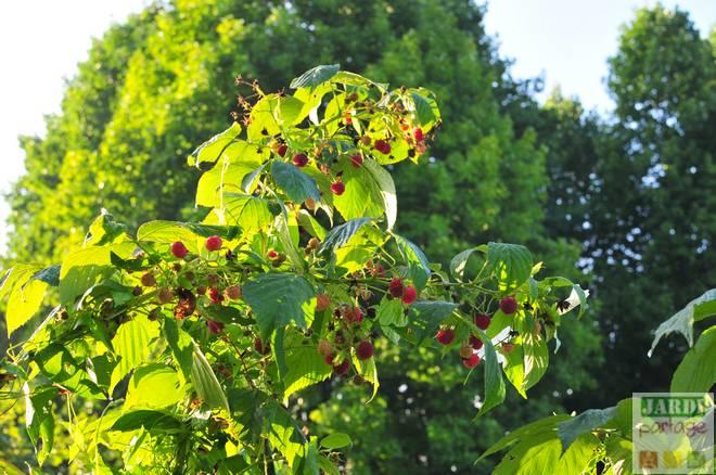petits fruits en septembre