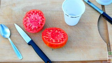 Photo de Comment faire ses graines de tomates ?